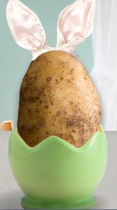 idohaoan-potato-contest