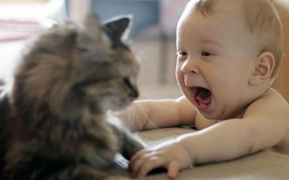 babykat