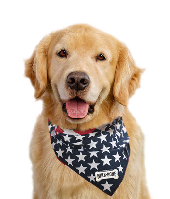 doggy-bandana