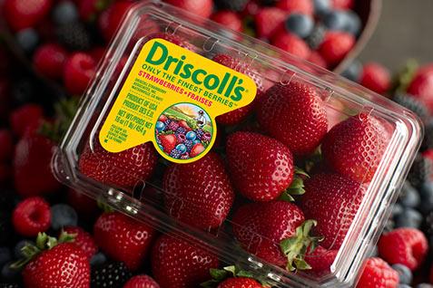 driscolls-freebies