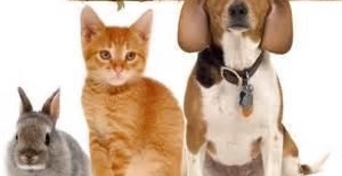 pets copy