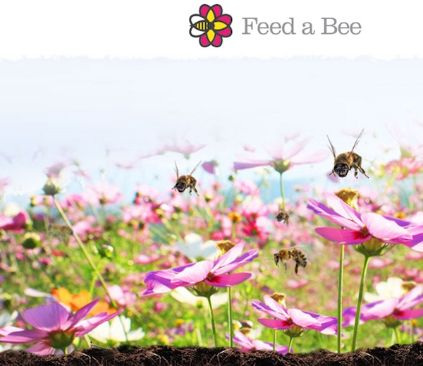 Feed-a-bee copy