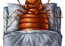 diy bed bug