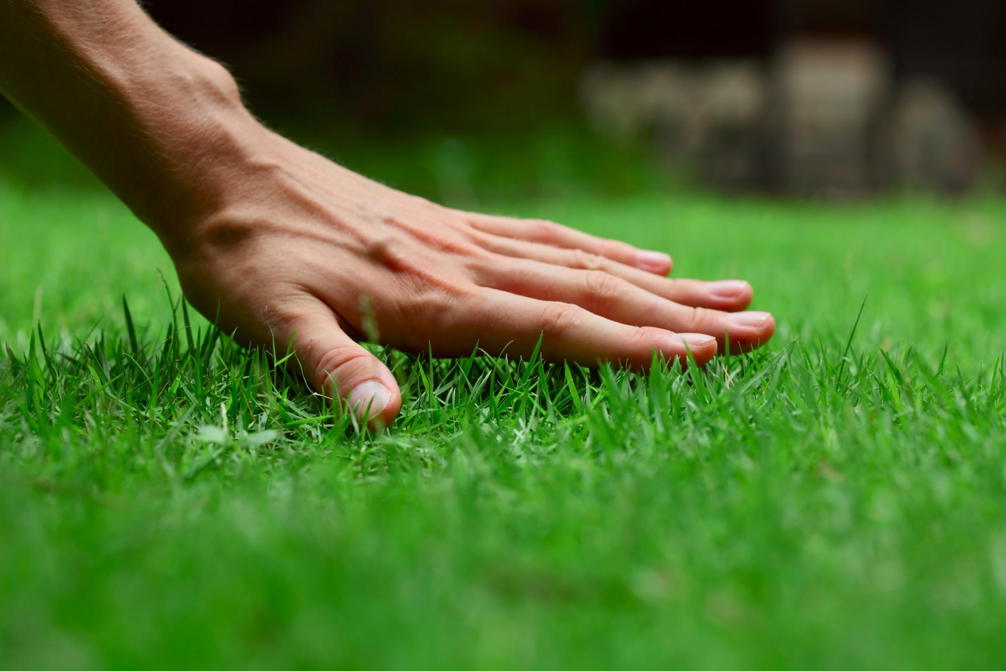 hand feeling lawn