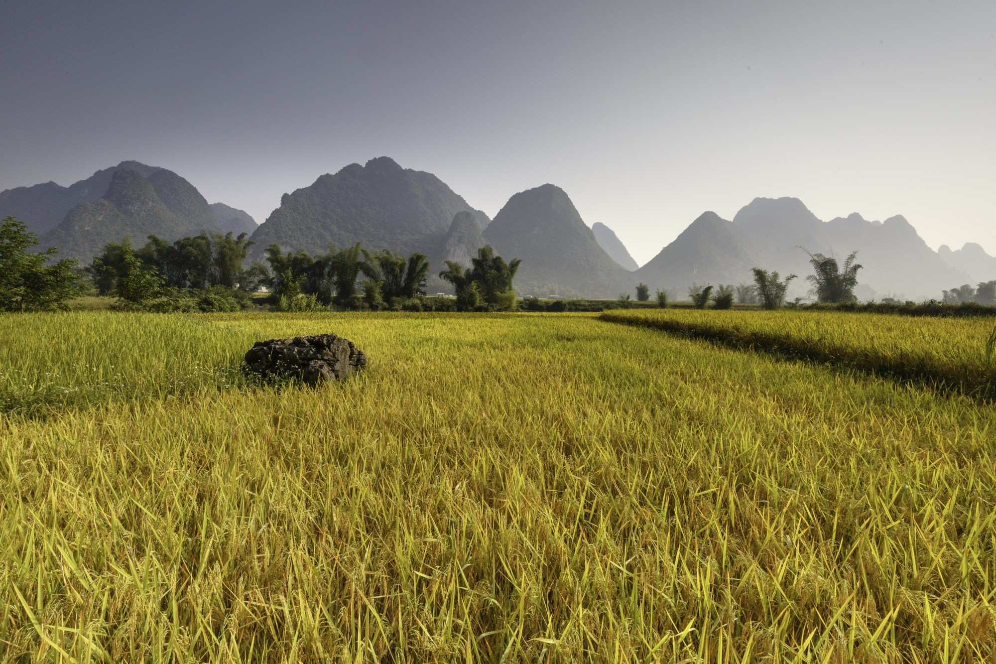 field and mountains in asia